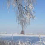Natuurgebied de Steendert in de winter